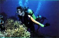 Photo of a Scuba Diver with a Disability